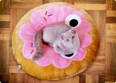 lilac scottish fold misa on a donut pillow from kid robot