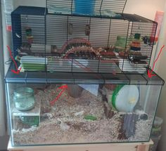 another awesome gerbil set up idea