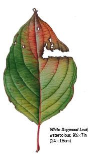 How to Paint Leaves in Watercolour | Features | Painters Online