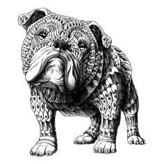 English Bulldog (For Sale)