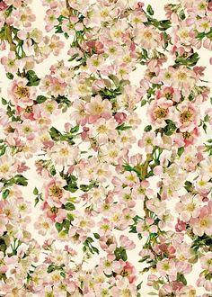 In Japan werden Kirschblüten für ihre vergängliche Schönheit bewundert und verehrt. Diese Designtapete zeigt ein Kirschblütenfest, das den Zauber der zarten Blüten perfekt einfängt. Ein Kompliment an die Natur, das zum romantischen Träumen verleitet. #wallpaper