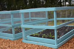 raised beds enclosed with chicken wire!  This is really pretty and would keep out hungry animals.