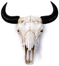 Bufallo, bison skull replica. Size (inches): H-4.75, L-12, W-11.5.