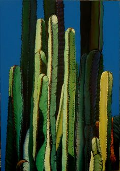 Part of the Cactus Collection by French-Australian artist Pascale Boulle.