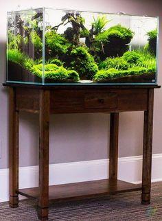 U-style nature aquarium