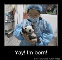Funny pictures about Baby Panda Is Happy. Oh, and cool pics about Baby Panda Is Happy. Also, Baby Panda Is Happy photos. Cute Funny Animals, Funny Animal Pictures, Funny Cute, The Funny, Cute Pictures, Funniest Pictures, Funny Photos, Hilarious Pictures, Random Pictures
