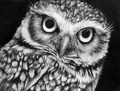 black and white photography owl - Google Search