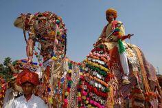 Camel Parade at the Jaisalmer Desert Festival, Rajasthan