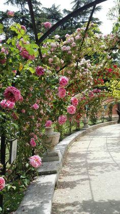 Rosaleda del Parque del Oeste . Madrid.