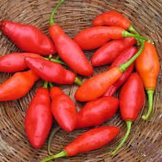 Bahamian Chili Pepper. 95,000 - 110,000 Scoville Units. The Bahamian pepper originates from the Bahamas. This small, round pepper grows to only about an inch in length, and may be found in an assortment of colors, including yellow, orange, green and red.