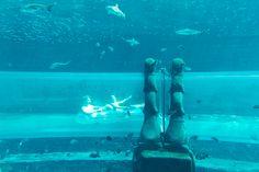 Aquaventure Waterpark - Dubai, United Arab Emirates. Photographer: Wanderlust by Jona
