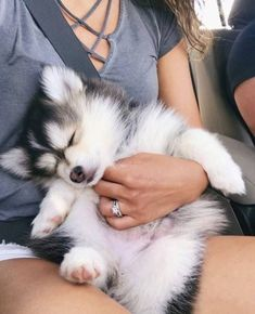 Pets do it again and make us smile in the face! 😉 precious Pomsky - - Pets do it again and make us smile in the face! Super Cute Puppies, Cute Baby Dogs, Cute Little Puppies, Cute Dogs And Puppies, Cute Little Animals, Cute Funny Animals, Cute Cats, Doggies, Adorable Puppies