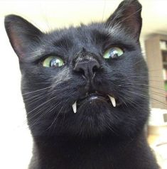 Woman Gets Surprised When Her Rescue Cat Turned Out to Be A Vampire