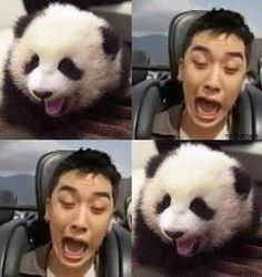 seungri, panda, and bigbang Daesung, Gd Bigbang, Bigbang G Dragon, Big Bang Memes, Big Bang Kpop, Choi Seung Hyun, Gu Family Books, Fandom, Korean Bands