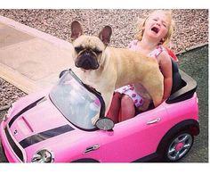 """Mommmmmmm!!!..... the Frenchy stole my Car again!"", French Bulldog."