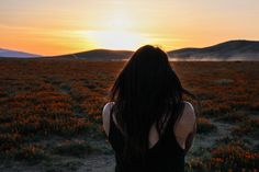 The Stumbleweeds ( Antelope Valley Poppy Reserve, Poppies, Channel, Public, Long Hair Styles, Facebook, Photo And Video, Check, Youtube