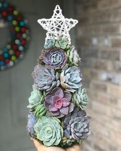 Succulent Tree, Succulent Images, Christmas Is Over, Christmas Fun, Christmas Wreaths, Colorful Succulents, Faux Succulents, Halloween Decorations, Christmas Decorations