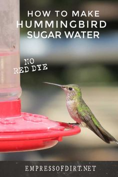 How to make nectar for hummingbirds in the right sugar to water ratio to match how nature does it. Also see which feeders are best for the birds. Hummingbird Water Recipe, Homemade Hummingbird Nectar, Homemade Hummingbird Food, Humming Bird Nectar Recipe, Hummingbird Flowers, Hummingbird Garden, Sugar Water For Hummingbirds, How To Attract Hummingbirds, Humming Bird Feeders