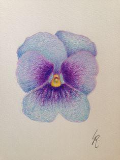 26 maart 2015 Blauw viooltje