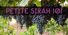 Learn about Petite Sirah, a red wine grape that a lot of people get confused about because it shares a similar name with Syrah. Get the facts in our guide!