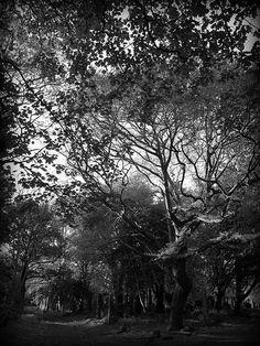 Warriston Cemetery | Flickr - Photo Sharing!