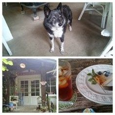 熊本県  阿蘇  カフェ 南阿蘇村  のほほんCAFE ボワジョリに行って来ました ゆっくりとできるカフェで 看板犬が店内をうろうろいて 犬派には良い店ですよ    #熊本県  #南阿蘇 #カフェ #犬同伴 tags[宮崎県]