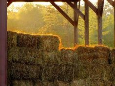 Wow. I can smell the hay, feel the warmth.... :)