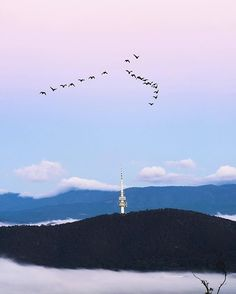 See spectacular 360 degree views of Canberra's region from Telstra Tower night and day. Feel the wind in your hair on the open viewing platforms or stay warm and dry during winter months in their enclosed viewing gallery for some of the best views of Canberra. Photo by Instagrammer @topkidz_canberra. #visitcanberra