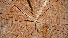Endeveden er viktig � beskytte. Treverk er ett levende materiale og selv om treet er hogd har den fortsatt egenskapene med � suge opp vann. Derfor er ...