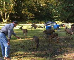 Lake Cowichan Vancouver Island, Horses, Animals, Animaux, Horse, Animal, Animales, Animais