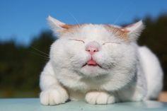 Cat_Shiro In The Sunshine
