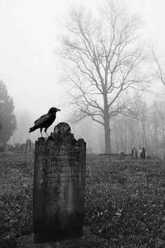 cemetery crow....