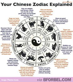 What Your Chinese Zodiac Sign Says About You…