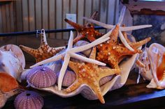 Google Image Result for http://tuvaluhome.files.wordpress.com/2012/05/giant_starfish_clam_shell.jpg