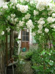 arbor cottage garden Cottage garden Image Search Results for landscaping ideas English Manor Garden & Interiors : My Notting Hill Garden Cottage, Home And Garden, Garden Living, Climbing Roses, White Gardens, My Secret Garden, Garden Gates, Garden Arbor, Dream Garden