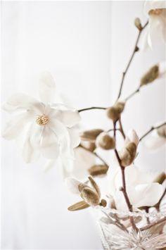 (via photolivika - Весна и магнолии.)