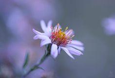 Purple haze by Elena S on 500px