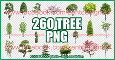 260 TREES - PNG ~ ZENT DESIGN 2D