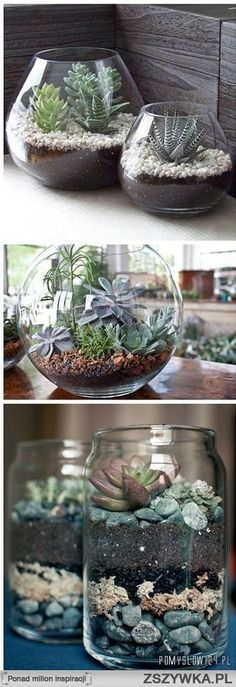 succulents in mason jars