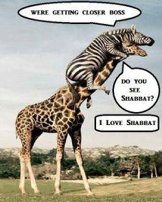 Almost Shabbat! Love Shabbat! Praise Yah!