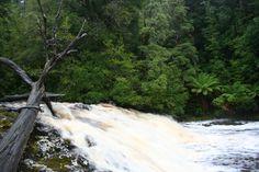 Galadriel's Cascade, Tarkine Rainforest, #Tarkine #Australia © Nicole Anderson | The Tarkine Wilderness is threatened. Protest on Pinterest: pinterest.com/tarkine #SaveTarkine