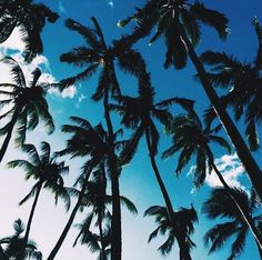 www.the-saltstore.com | Use the code PIN10 at the check out to take 10% off your next purchase! #Beach #Palms
