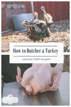 How to Butcher a Turkey (step-by-step instructions with video and photos!) plus two things I WON'T do again next year! Backyard Farming, Chickens Backyard, Backyard Poultry, Meat Chickens, Raising Chickens, Guinea Fowl, Small Farm, Coops, Livestock