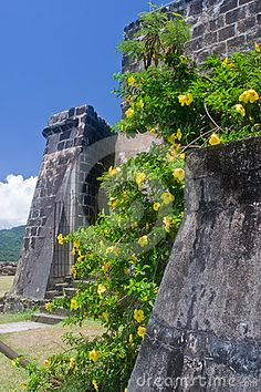Photo about Walls of Fort Frederick on the Caribbean island of Grenada overrun by yellow flowers. Image of caribbean, clouds, military - 24418093 Grenada Caribbean, Southern Caribbean, Caribbean Carnival, Caribbean Cruise, Central America, South America, Grenada West Indies, Honduras, Granada