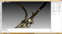 skan 3D czaszka poroże jelenia