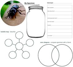 Bug Hunt.  Find a bug, study him and write about him in a variety of ways.