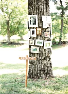Create a real family tree! Showcase your family tree with your parents' wedding photos, grandparents' wedding photos, and great grandparents' wedding pho...