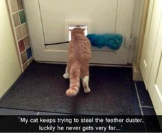 Funny Animal Pictures - View our collection of cute and funny pet videos and pics. New funny animal pictures and videos submitted daily. Funny Cat Photos, Funny Pictures, Funny Images, Funniest Pictures, Daily Pictures, Random Pictures, Baby Cats, Cats And Kittens, Ragdoll Kittens