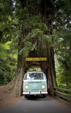 VW Bus & Drive Through Tree by Crux Creative on Creative Market . - VW Bus & Drive Through Tree by Crux Creative on Creative Market - Wolkswagen Van, Vw Beach, Vw Vintage, Vintage Volkswagen Bus, Volkswagen Bus Camper, Vw Kombi Van, Volkswagen Beetles, Volkswagen Transporter, Vw Camping