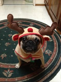 """""""Why is my rudolph nose on top of my head?"""""""